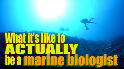 What it's like to ACTUALLY be a Marine Biologist   Dr. Gil   SciAll.org