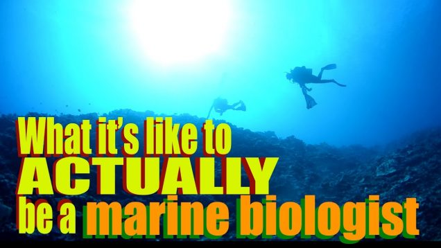 What it's like to ACTUALLY be a Marine Biologist | Dr. Gil | SciAll.org